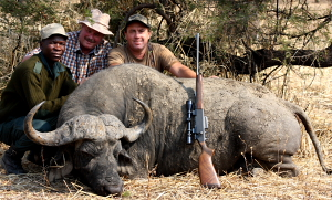 Very Large bodies Cape Buffalo taken with a .300 Win Mag shooting standard Remington 180gr Core Lokt